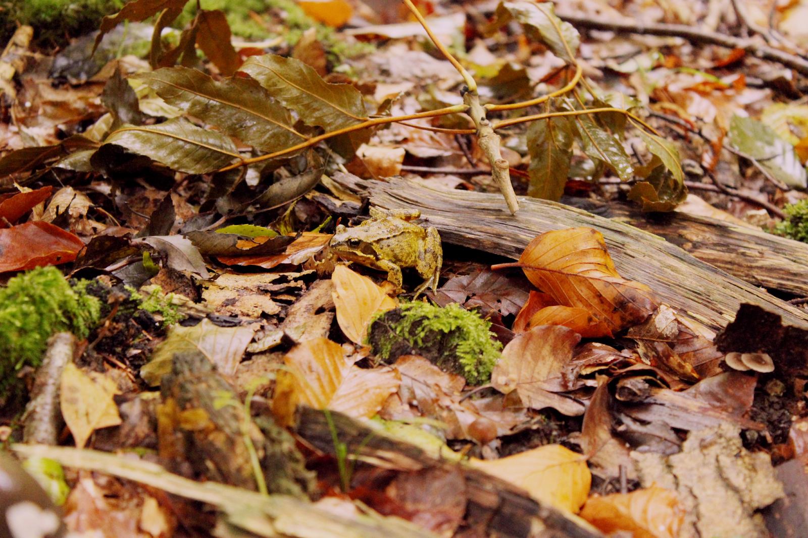 woodsss